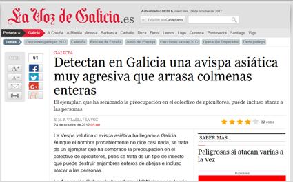 La avispa asiática invade Galicia