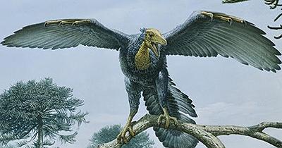 ¿Por qué los pájaros tienen alas para volar y no aletas?