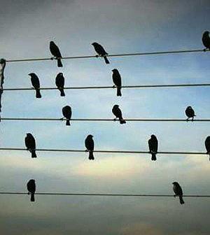 ¿Por qué los pájaros no se electrocutan cuando se apoyan en los postes de la luz?