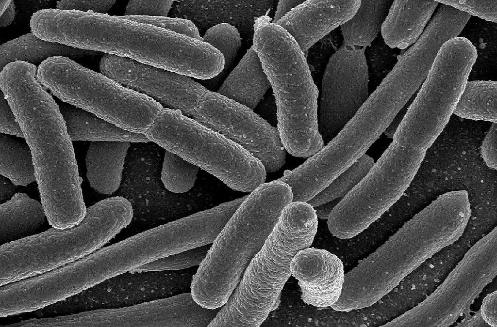 ¿Como é o cerebro dunha bacteria?
