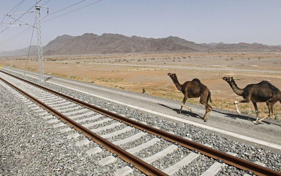 As mil e unha viaxes do AVE do deserto Dende que comezou a circular, en outubro pasado, percorreu 600.000 quilómetros e transportado a 410.000 viaxeiros