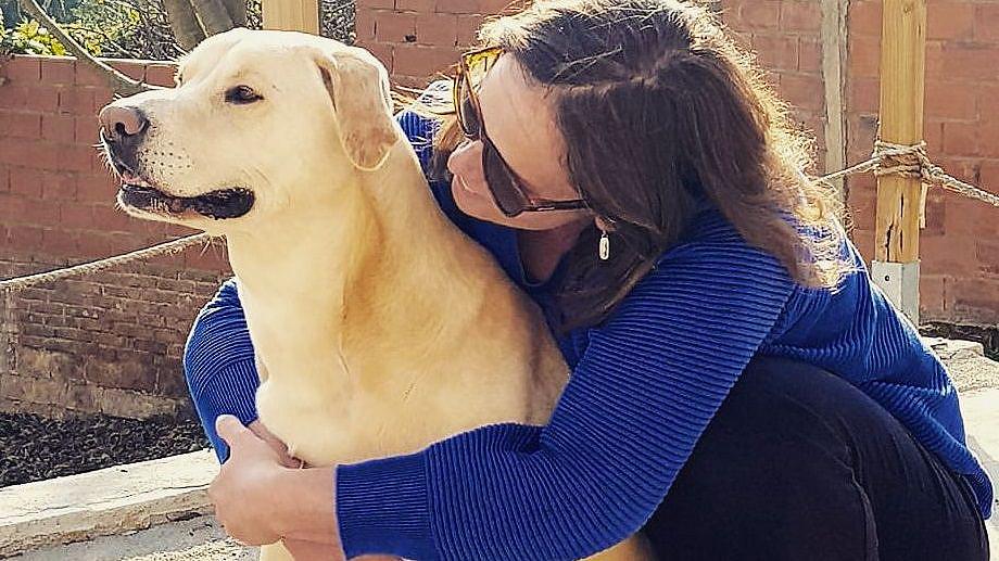 O can que detecta o cancro de pulmón Este exemplar, cruzamento de labrador e  pitbull, forma parte dun programa pioneiro en España do  Clínic de Barcelona que adestra cans para o diagnóstico