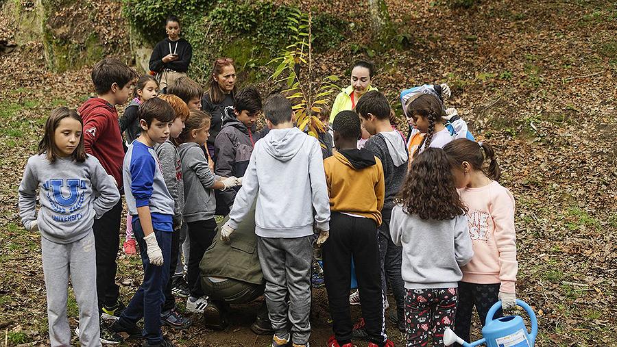 La celebración del Samaín y del otoño pone en valor la naturaleza Castañadas sin plástico y plantación de flores y verduras, entre las actividades programadas por los centros escolares gallegos