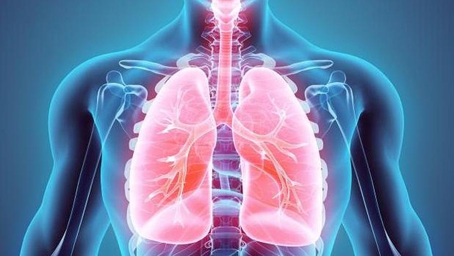 ¿Por que temos dous pulmóns no canto de un? Daniela, 9 anos