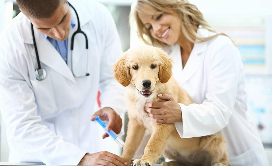 ¿Cal foi o/a mellor veterinaria de toda Europa? É que quero ser veterinaria. Iria
