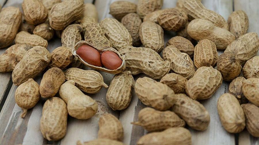 ¿Son os cacahuetes legumes? Valentina, 10 anos