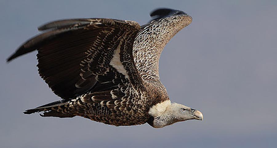 ¿Hasta qué altura pueden volar las aves? Cristina, 11 años