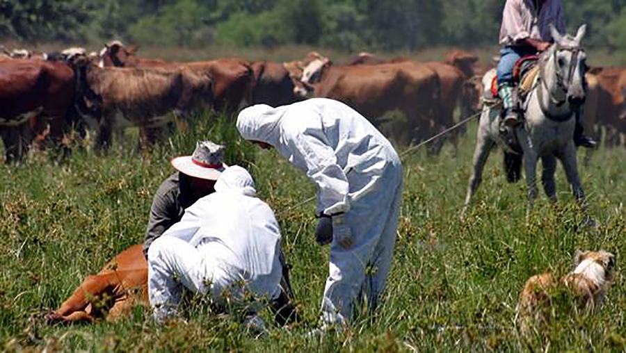La UE cerró en 1996 las fronteras a los productos cárnicos de Gran Bretaña para evitar la enfermedad de las vacas locas