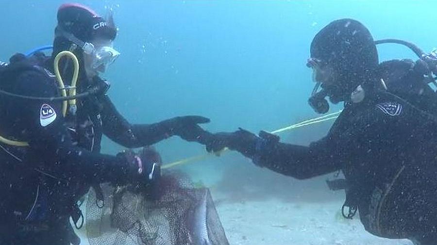 Rayas que se van, maragotas que se quedan Científicos de Vigo usan métodos acústicos para conocer los hábitos de las especies marinas de las Cíes