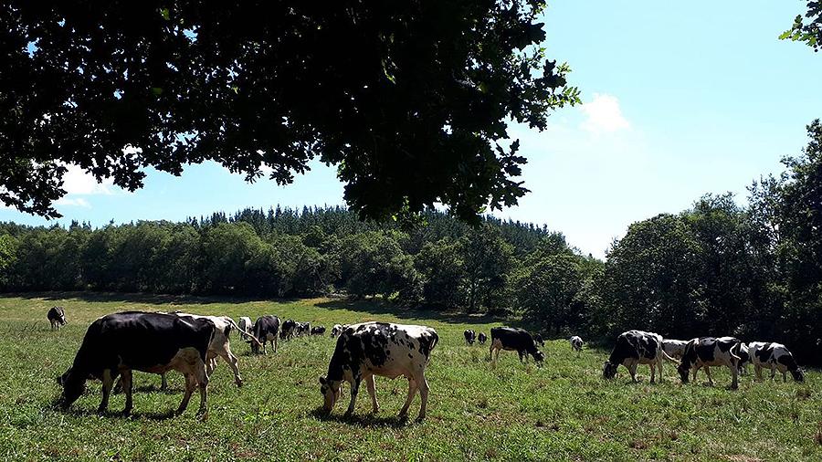La UE estudia que en el 2030 el 25 % de la tierra agrícola sea ecológica Esa parece ser una de las propuestas de partida de la estrategia de biodiversidad de la Comisión Europea que se presentará hoy
