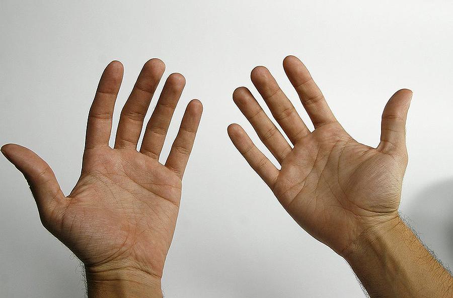 ¿Por que temos 5 dedos en cada man? David, 11 anos