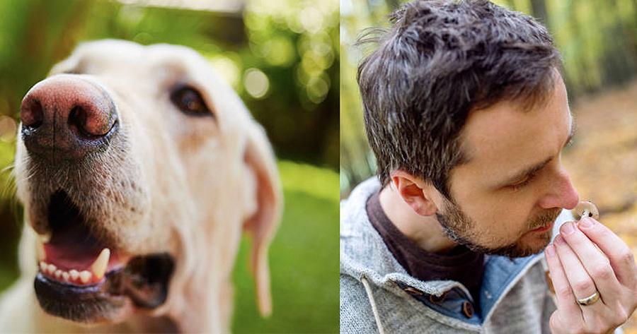 ¿Por que os humanos teñen un menor sentido do olfacto cos cans? Óliver, 11 anos