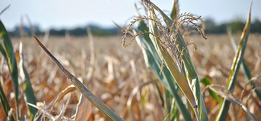 Información sobre como o aumento da temperatura afecta as plantas Thiago, 9 anos