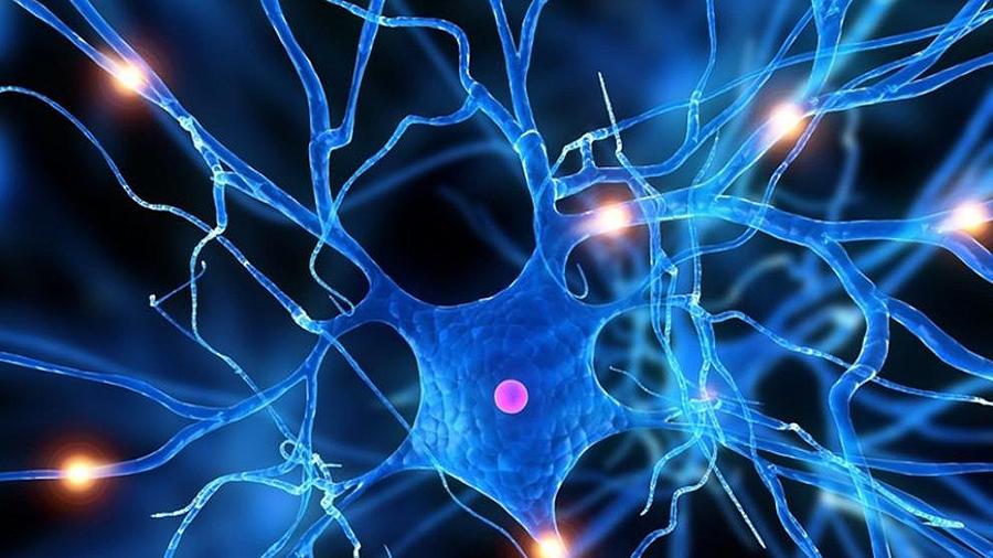 ¿Por que temos tantas neuronas? David, 11 anos