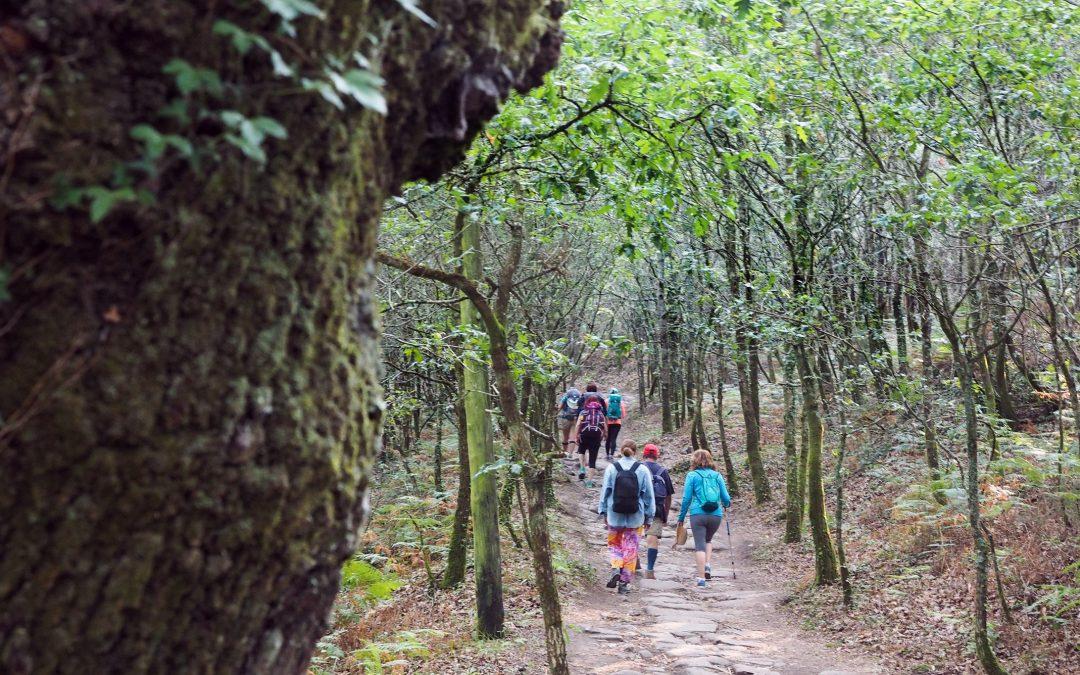 O Camiño que vén pola veciña do sur A ruta portuguesa é a segunda máis frecuentada, despois da francesa. O impulso que colleu nos últimos anos o aeroporto de Porto foi diversificando a orixe dos peregrinos